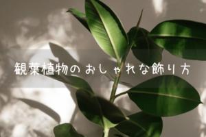 観葉植物のおしゃれな飾り方