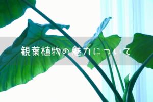 観葉植物の魅力について