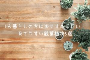 1人暮らしの方におすすめしたい!育てやすい観葉植物5選