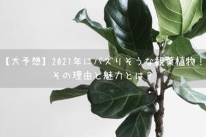 【大予想】2021年にバズりそうな観葉植物!その理由と魅力とは?