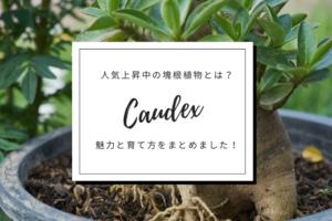 人気上昇中の塊根植物とは?その魅力と育て方をまとめました!