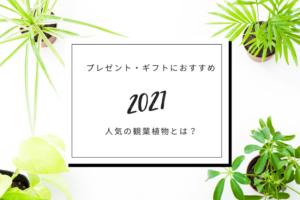 【2021年】プレゼント・ギフトにおすすめの人気観葉植物とは?
