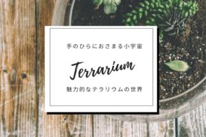 魅力的なテラリウムの世界