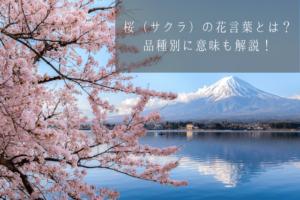 桜(サクラ)の花言葉とは?