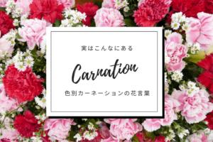 色別カーネーションの花言葉
