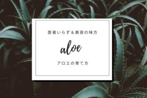 観葉植物アロエの育て方