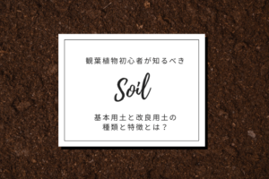 観葉植物初心者が知るべき基本用土と改良用土の種類と特徴とは?